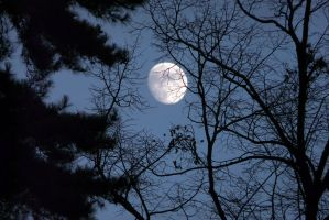 Moon through Trees by organicvision