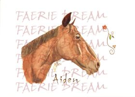 horse portrait by vrm1979