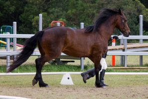 STOCK - Friesian Show 2012-82 by fillyrox