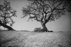 Atop the dry hill by Swaroop