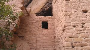Window into Spruce Tree House by themaincoon