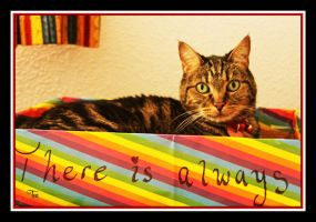 Your Rainbow Kitty by TeaPhotography