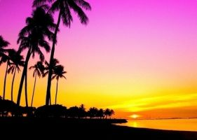 Sunset and Palm Trees Edit by Mellowax