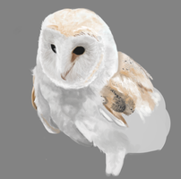 Barn Owl WIP by Steph1254