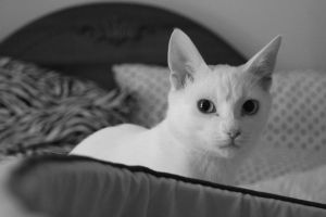 cat in black and white by bobbyfufu