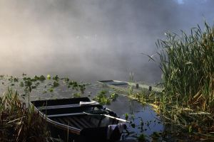 Morning in the swamp by s-ascic