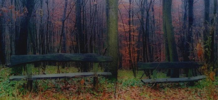 Two old bench by PigAndreas