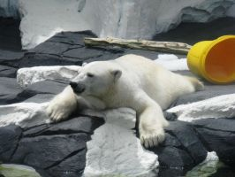 Seaworld Polar Bear by BigMac1212