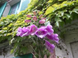 Giverny 2 by wildc5rd