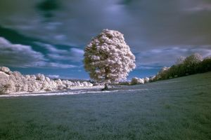 Tree in Infrared by planetwaves