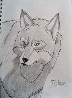 Toboe by fruitbatslyra