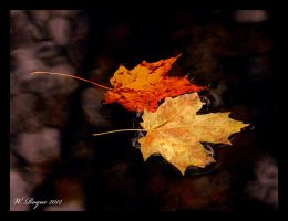 fall together by wroquephotography