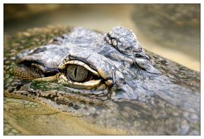Croc One by CptCapricious