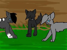 Nightpaw, Snowpaw, and Darkcloud. by Evee2002