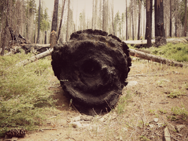 Charred Log1 by livdrummer