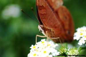 Eating ButterFly by saka50ft