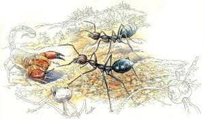 Exploding Ants by RobertMancini
