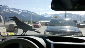 Crow on our Car by robinlstrauss