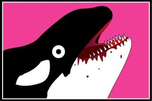 KILLER WHALE by Kirrrby