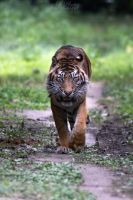 Rrrr! Move from my path human! by Seb-Photos
