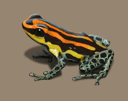 Dart poison frog by evolve2pro