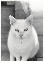 my cat by hlh2008