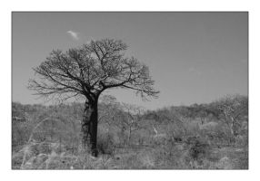 Just a tree in Zambia by sandor-laza