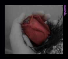 A Rose by anasinda