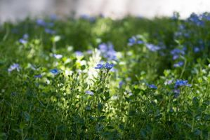 Ground Cover by Chiller252