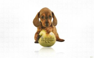 EgFox DOG Apple HD by Eg-Art