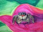 Jumpy spider by HerrLinde