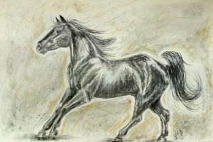 Charcoal cantering horse by GalopaWXY