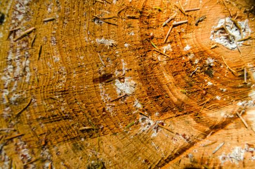 Wood Texture 2 by NeonAuraPhotography