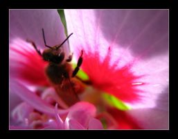 Bee in flower by MichelleMarie