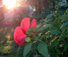 ..red.rays.. by coolingj7j77