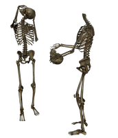 Skeleton - Head Trade 2 - PNG by markopolio-stock