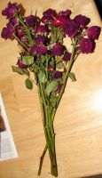 Dried Red Rose Boquet by FantasyStock