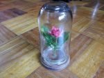beast rose bell jar by theblackpenny
