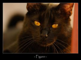 Figaro by frescendine