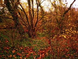 woods1 by awjay