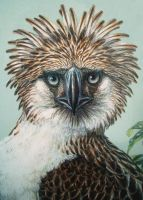 5. (DETAIL) PHILIPPINE EAGLE-Original Watercolor P by AllanSutherland
