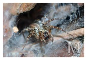 Spider In the Hole by microcosmos