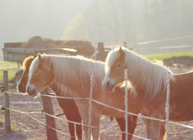 horses II by rockmylife