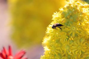 Collecting the pollen by N-ScapePhotography