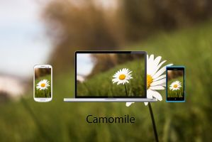 Camomile Wallpaper by BST1