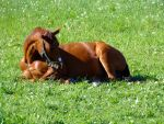 horse stock 8 by Ulvar-Stock