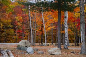 White Mountains  Fall Foliage  026 by FairieGoodMother