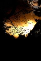 An evening in spring by Budeltier