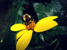 Bumble Bee by AwakeYourSoul