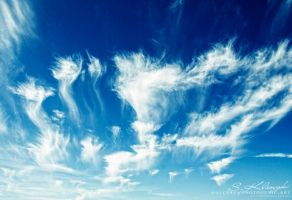 The Raising Hope by photogenic-art